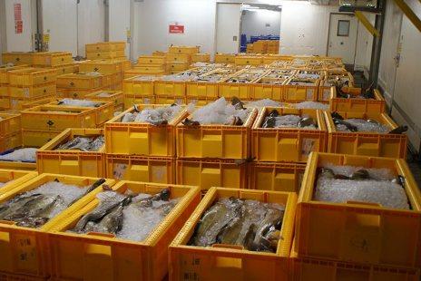Lerwick Fish Market